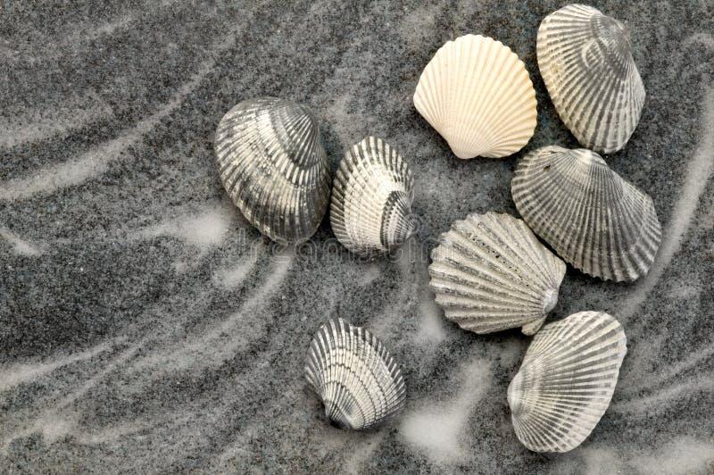 Grijze Zeeschelpen op Grijs Zand royalty-vrije stock fotografie