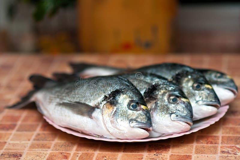 griled helt för dorada fisk arkivfoto