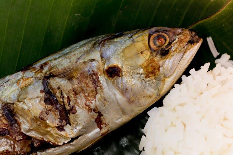 Grill Mackerel fish with rice stock photo