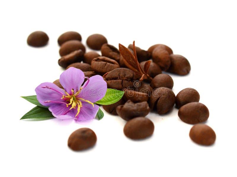 Grillade brunt isolerade kaffeb?nor och fr? arkivfoto