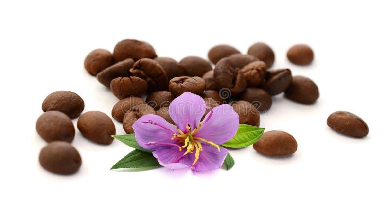 Grillade brunt isolerade kaffeb?nor och fr? arkivfoton