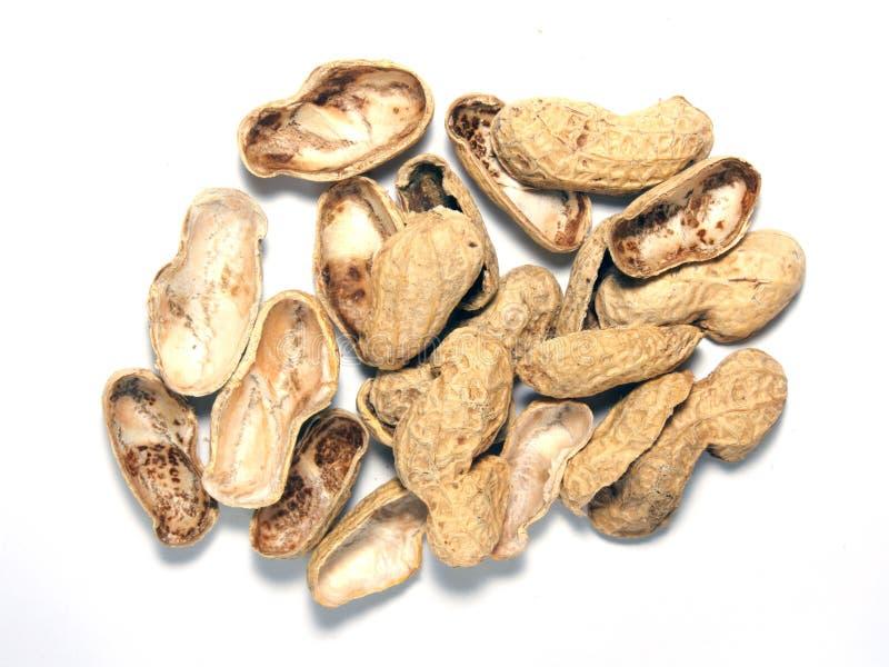 grillade isolerade jordnötter arkivbild