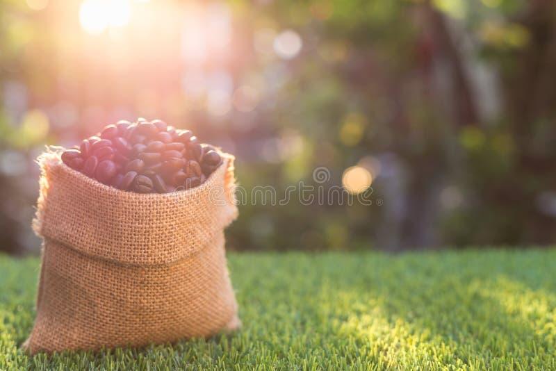 Grillade kaffebönor i liten säck på grönt gräs barn för for för liemannoutbook utomhus- royaltyfria foton