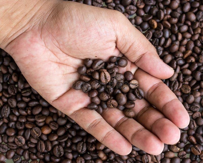 Grillade kaffebönor i mänskliga händer fotografering för bildbyråer