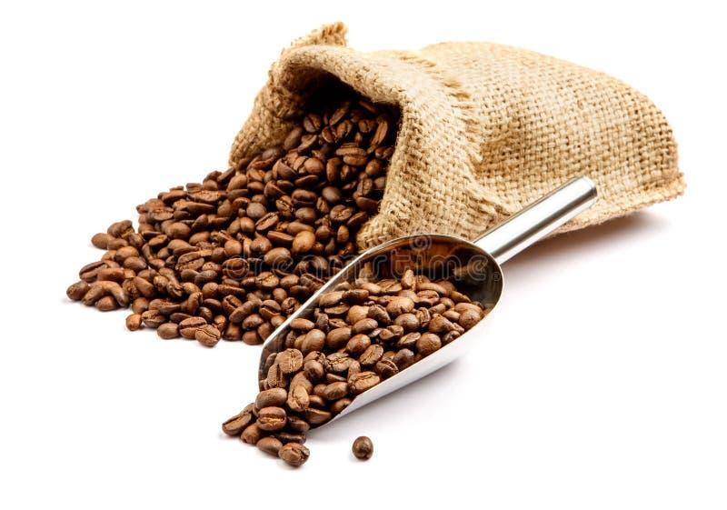 Grillade kaffebönor i påsen som isoleras på vit bakgrund royaltyfri bild