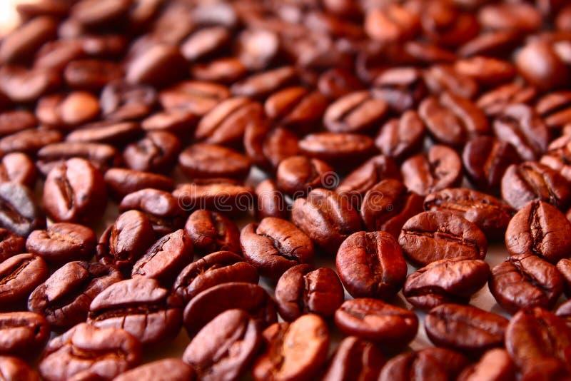Grillade kaffebönor innan att vara plugghäst royaltyfri foto
