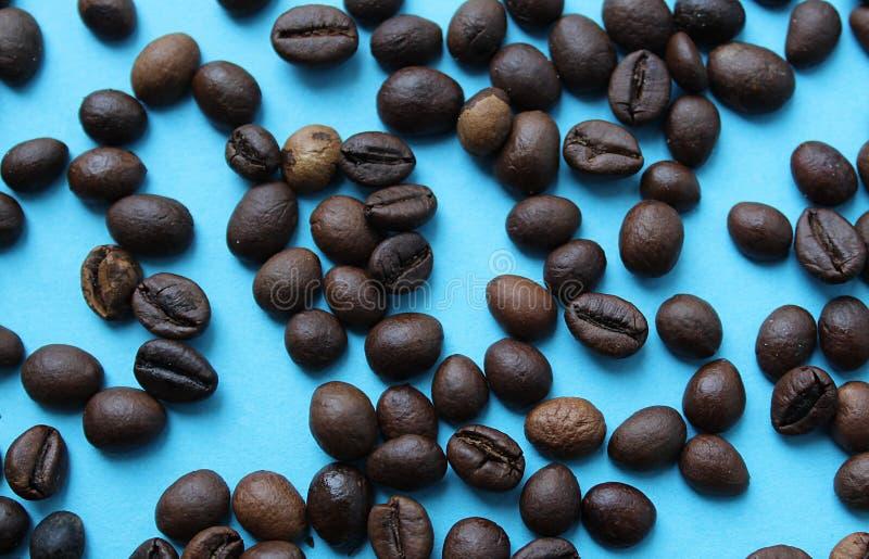 Grillade kaffebönor ligger på en blå bakgrund arkivbild