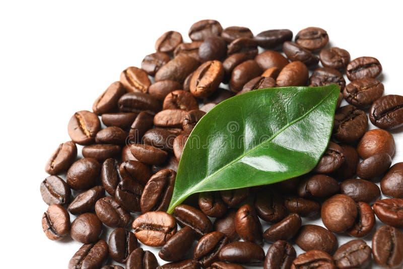 Grillade kaffebönor och grönt blad arkivfoton