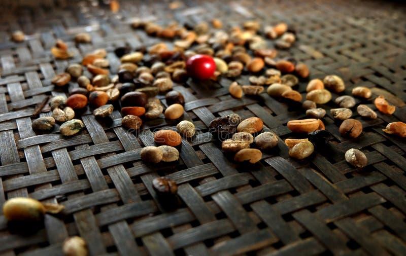 Grillade kaffebönor på bambukorg arkivbild
