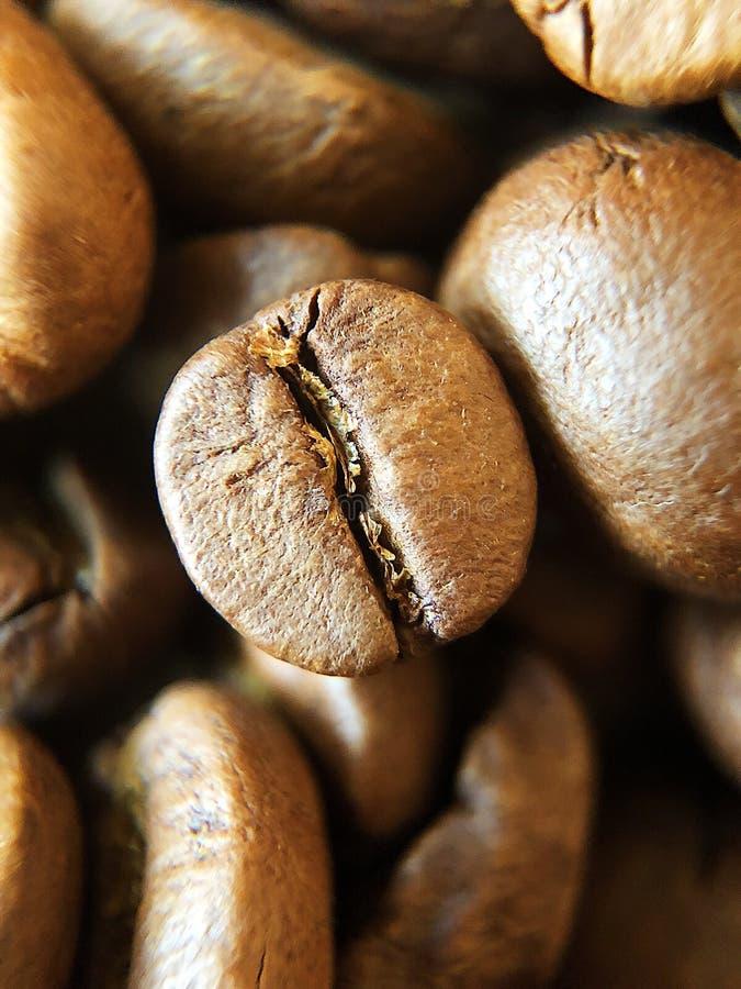 Grillade kaffebönor på tabellslutet upp fotografering för bildbyråer
