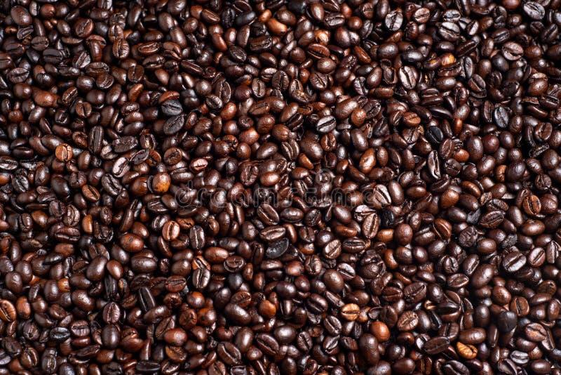 Grillat kaffebönor, arabica och robusta med bakgrund fotografering för bildbyråer