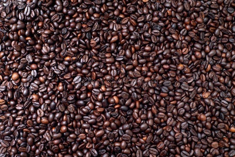 Grillat kaffebönor, arabica och robusta med bakgrund royaltyfria bilder