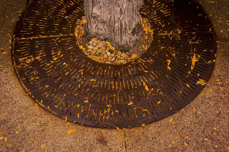 Grille d'arbre photos stock