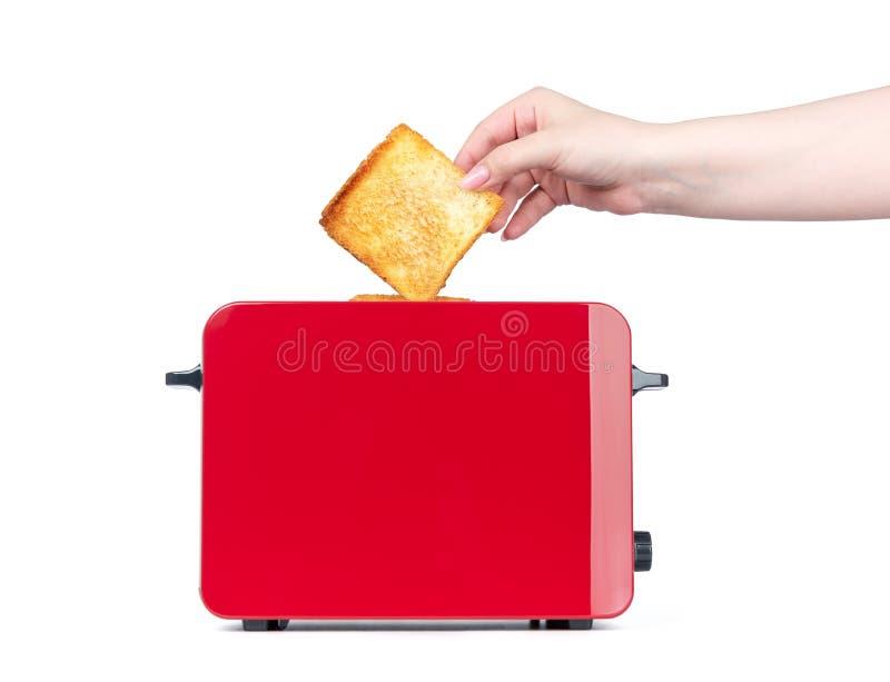 Grille-pain rouge avec du pain grillé La fille de mains retire les pains grillés prêts D'isolement sur le fond blanc Le fichier c photo stock