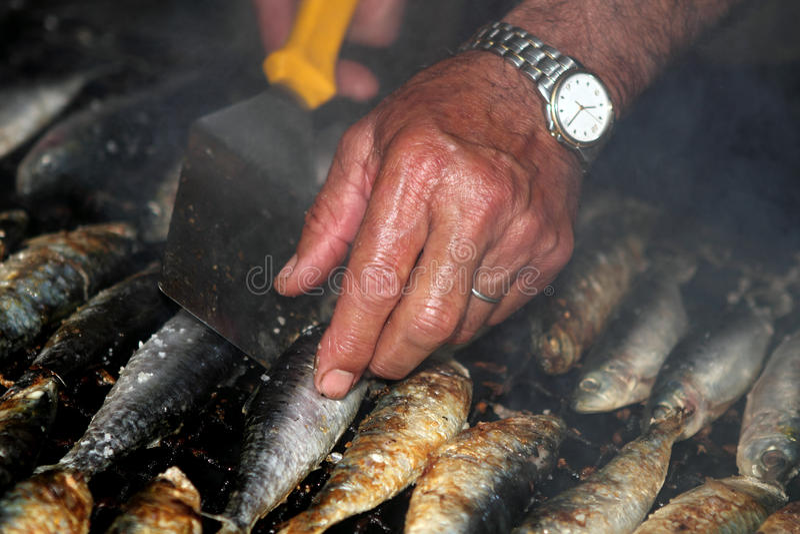 Grilled sardines. Closeup view of fresh manually grilled mediterranean sardines royalty free stock image