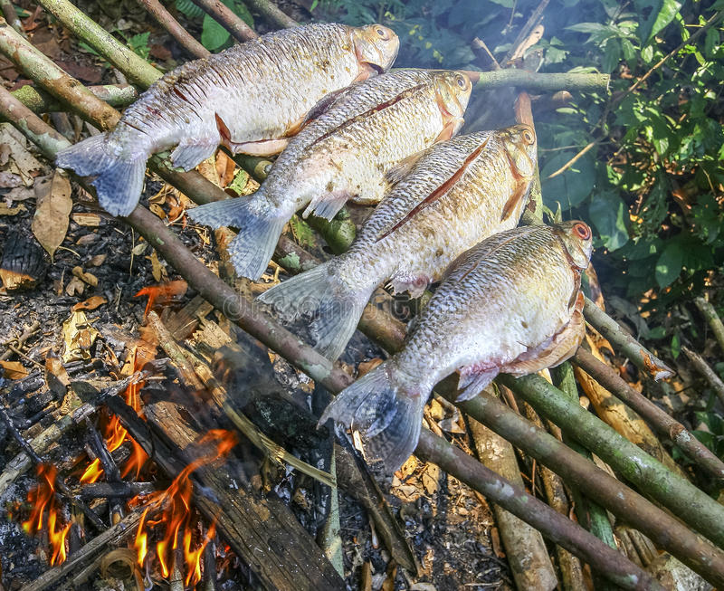 Download Grilling Fish On Campfire In Forest Stock Image