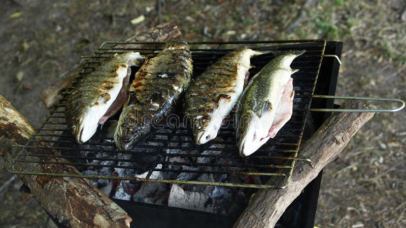 Download Grilling trout stock photo. Image of four, whole, dinner - 20131908