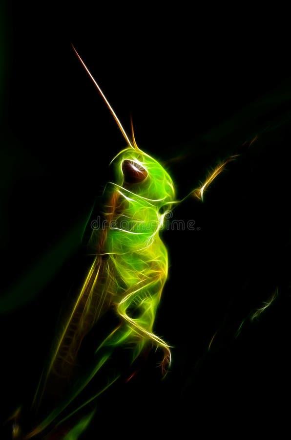 Grillo de Jiminy fotografía de archivo libre de regalías