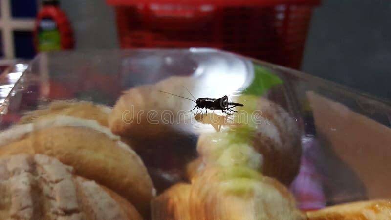 Grillo del insecto imágenes de archivo libres de regalías