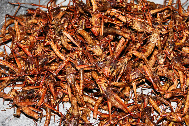 Grillos Fritos Imagen De Archivo. Imagen De Vendedor