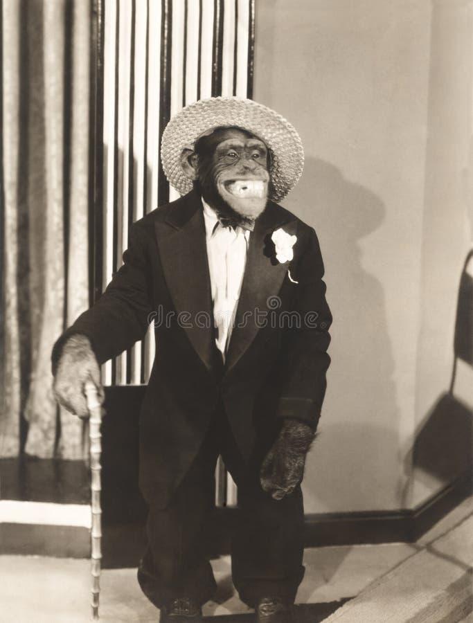 Grimacerie du singe dans le smoking photographie stock libre de droits