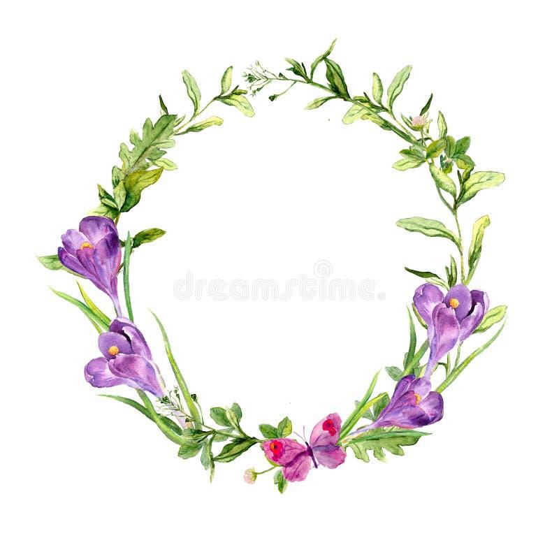 Grinalda com as flores do a?afr?o da mola, grama da P?scoa, borboleta Quadro do c?rculo watercolor ilustração stock