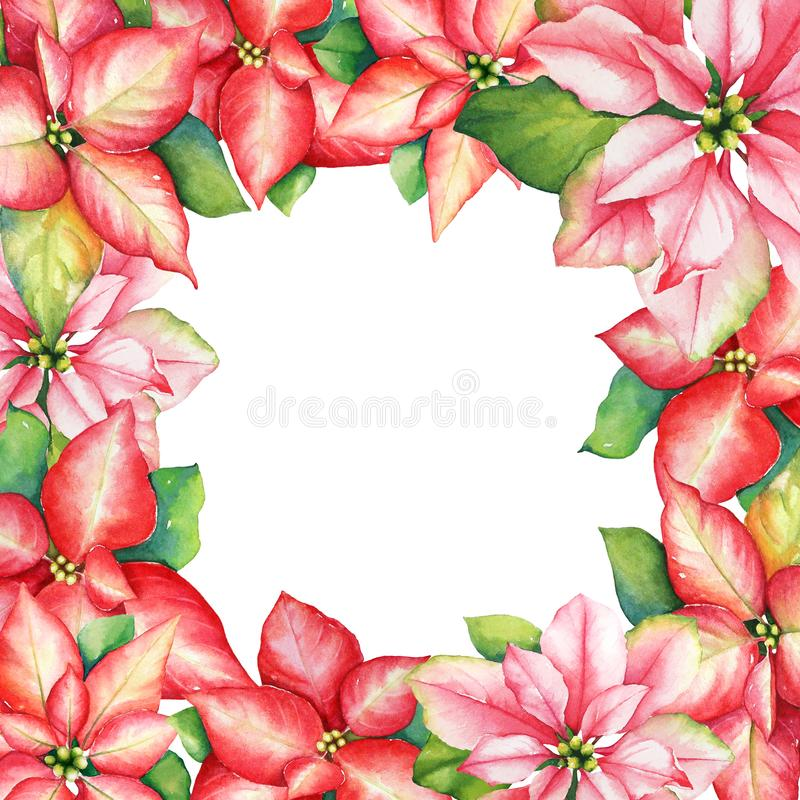 A grinalda da aquarela da poinsétia vermelha e cor-de-rosa floresce para Chris ilustração royalty free