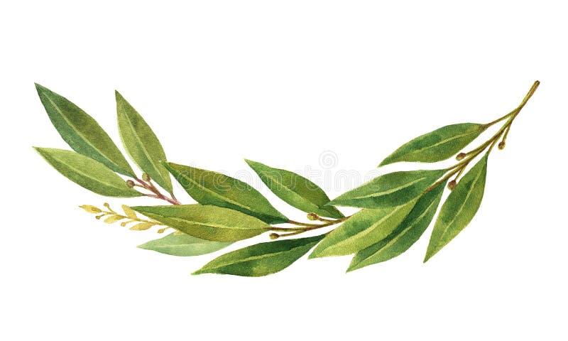 Grinalda da folha de louro da aquarela isolada no fundo branco ilustração do vetor