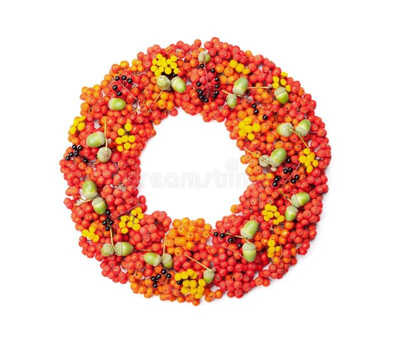Grinalda do outono de Rowan, das bolotas, das flores e dos vários frutos isolados na opinião superior do fundo branco Denominação foto de stock royalty free