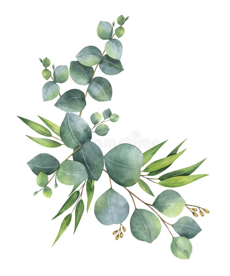 Grinalda do vetor da aquarela com as folhas e ramos verdes do eucalipto ilustração do vetor