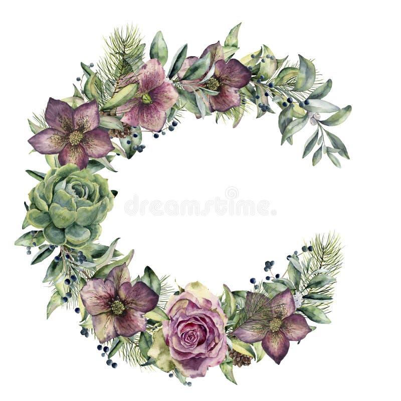 Grinalda floral da aquarela com flores do hellebore O snowberry pintado à mão, o ramo do abeto e as folhas, baga, planta carnuda, ilustração do vetor