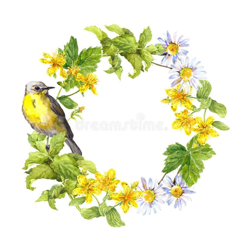 Grinalda - pássaro da mola, flores do prado, grama Quadro floral da aquarela ilustração do vetor