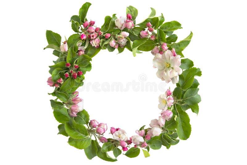 Grinalda redonda floral com a flor da maçã isolada no fundo branco imagens de stock royalty free
