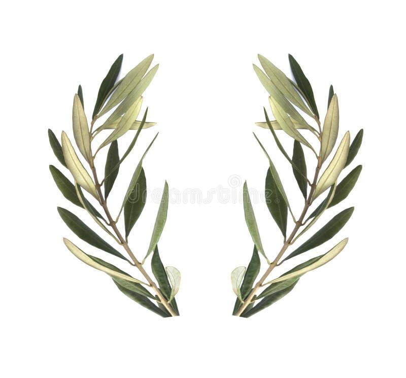 Grinalda verde-oliva do ramo de oliveira ilustração royalty free