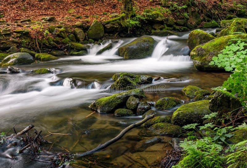 Grincement puissant avec la cascade dans la forêt verte photos libres de droits