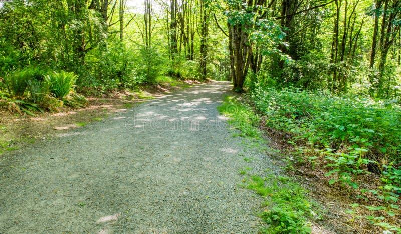 Grintweg door het bos royalty-vrije stock foto's
