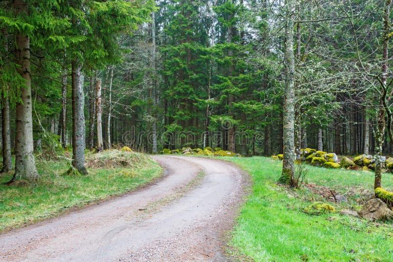 Grintweg in het bos royalty-vrije stock foto's