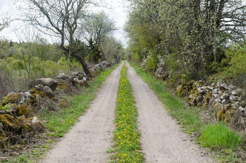 Grintweg met bloesempaardebloemen bij het Zweedse platteland stock fotografie