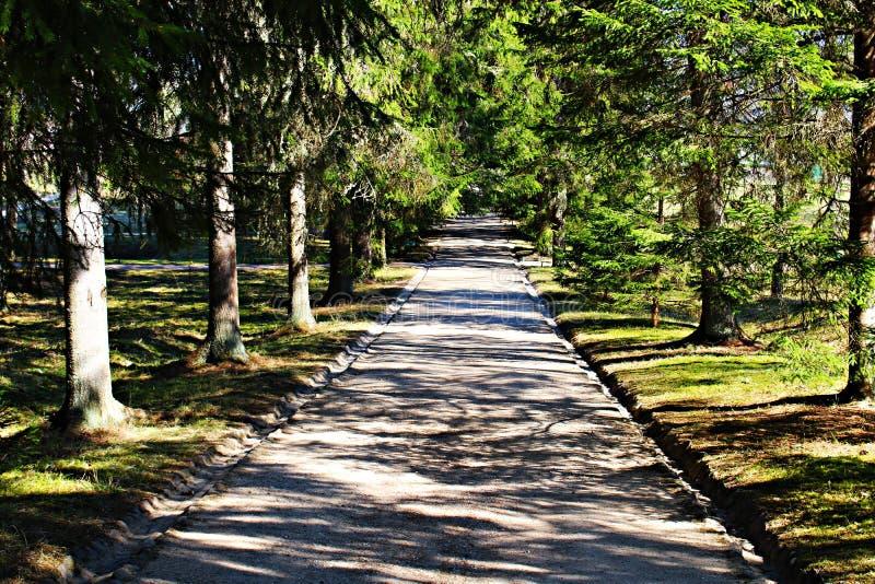 Grintweg voor gangen die ver in het bos gaat royalty-vrije stock fotografie