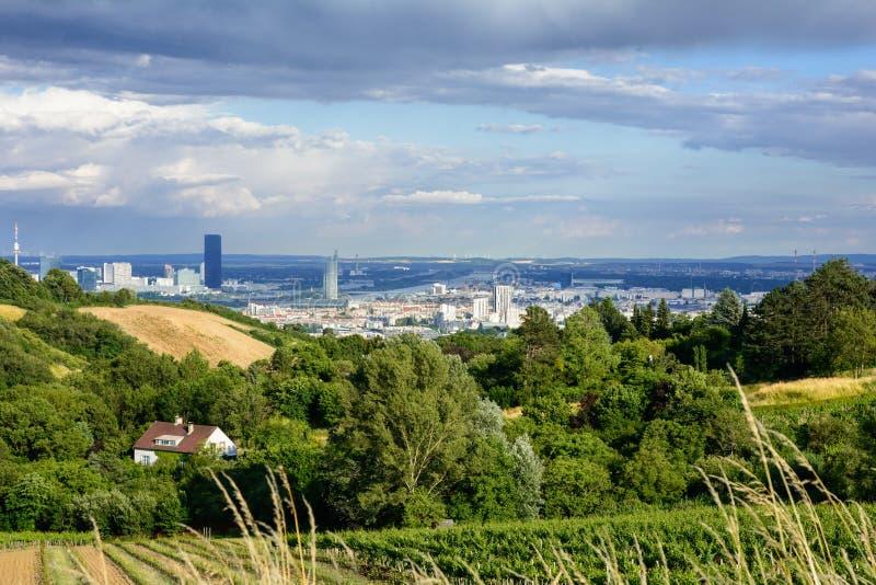 Grinzing jest przedmieściem Wiedeń Winogrono uprawia ogródek w widokach Wiedeń i wzgórzach przy zmierzchem fotografia stock