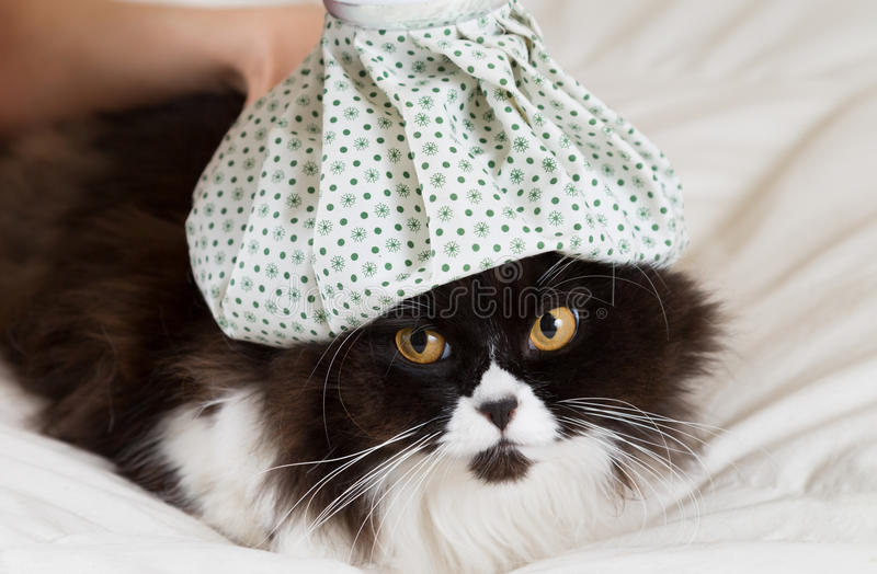 Grippe de chat photo libre de droits
