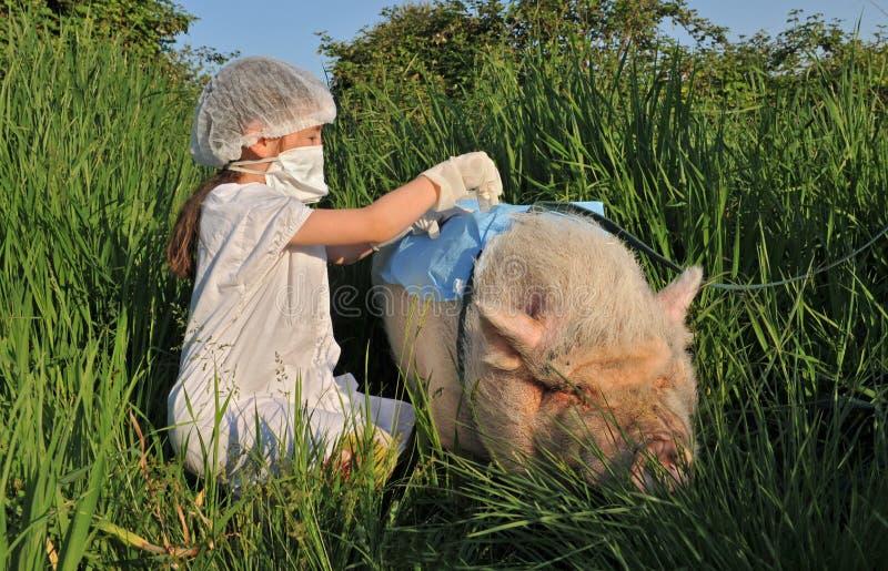 Grippe de grippe de porcs image libre de droits