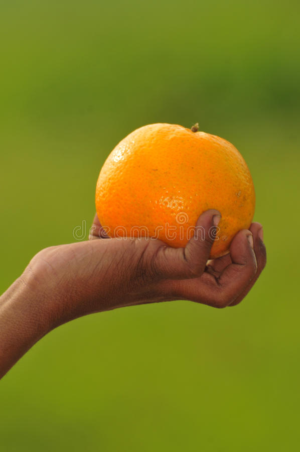 Gripping Orange Stock Photography