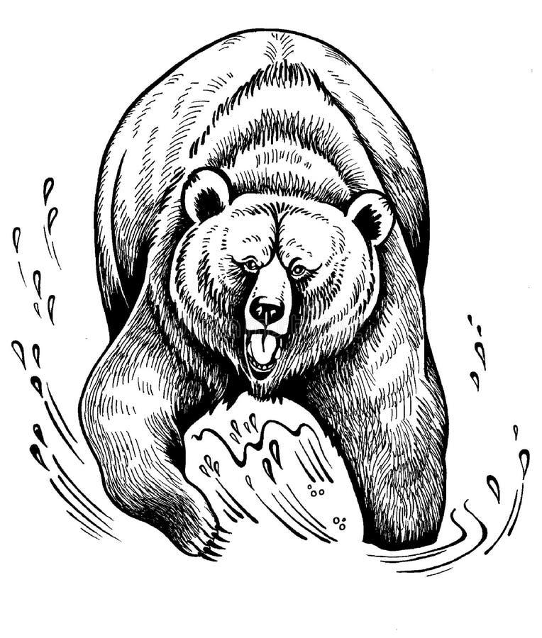 Grisáceo Brown del oso ilustración del vector