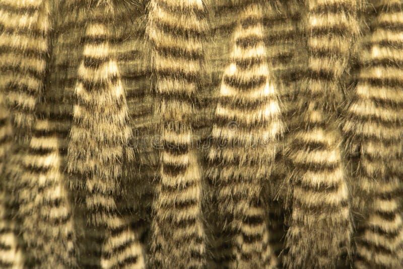 Gris, concept foncé de faune de montagne de Brown Wolf Fox Fur Natural, animal et style pour le fond, les textures et le papier p photographie stock libre de droits