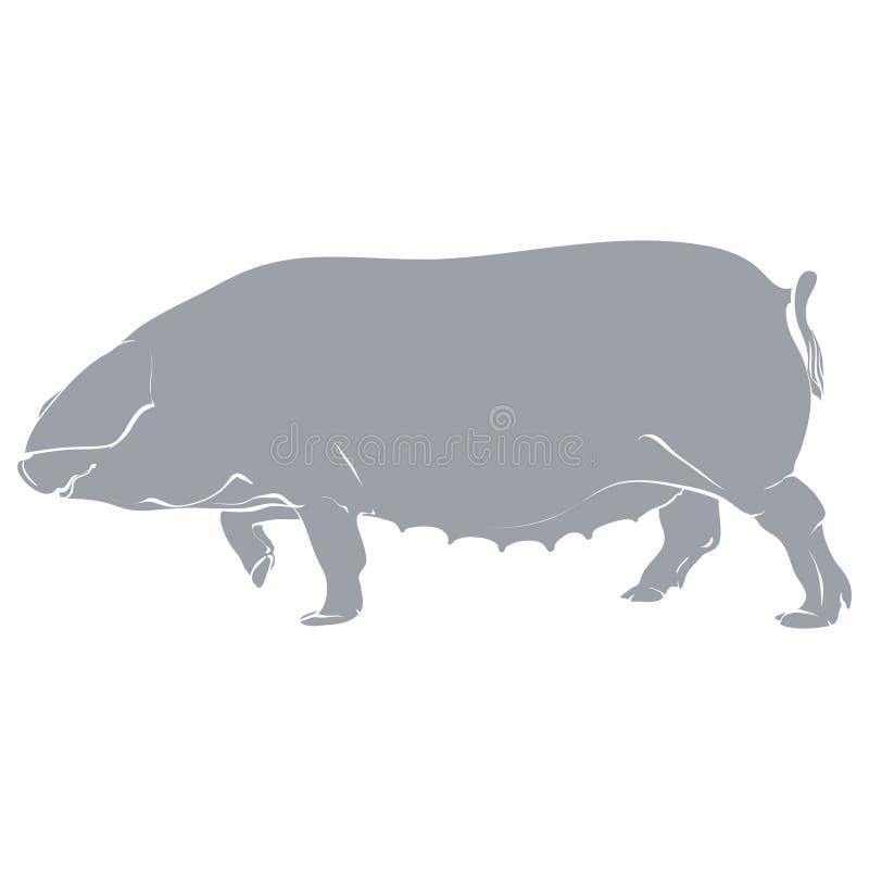 Gris del cerdo de la plantilla fotos de archivo