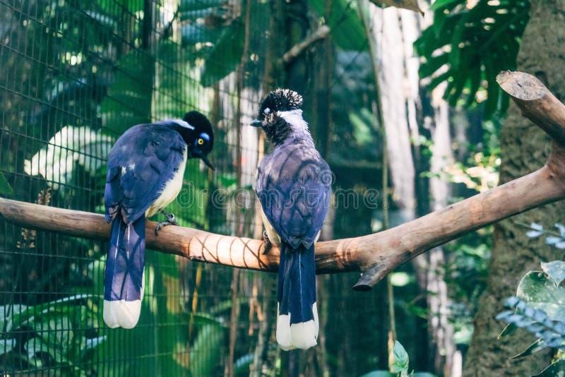Gris et perroquets noirs Brésil photographie stock libre de droits
