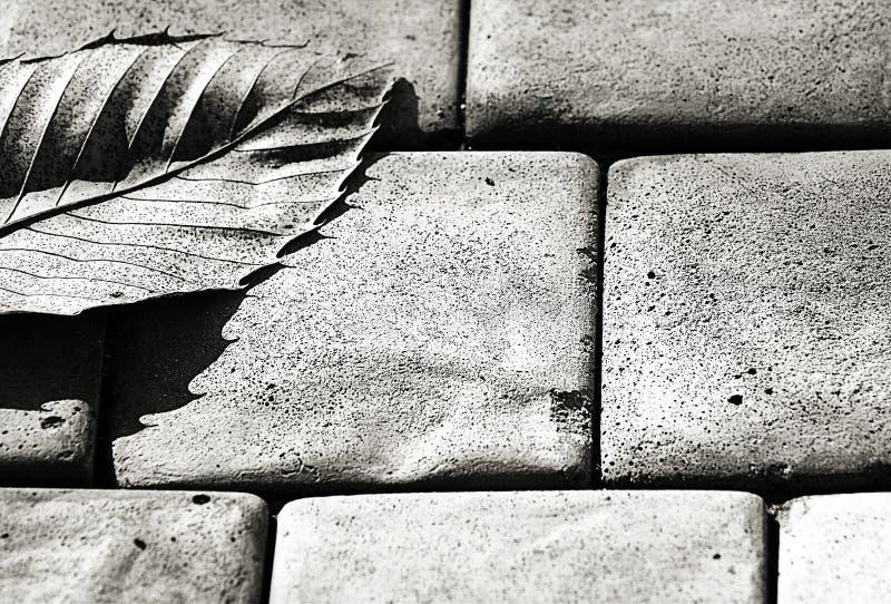 Download Gris - une lame photo stock. Image du gris, mort, nature - 59220