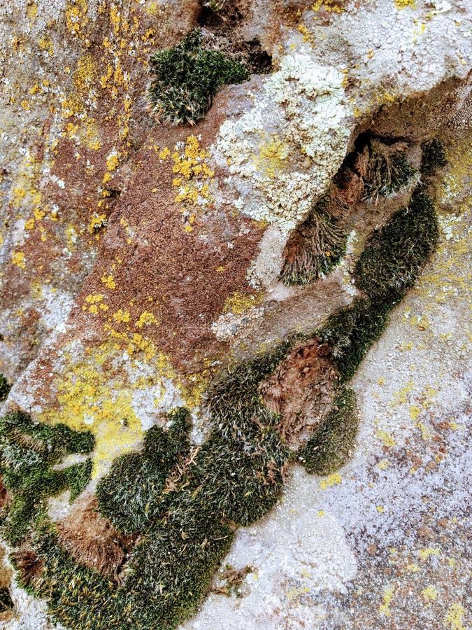 Gris, verde, negro, liquen en la roca, combinación simbiótica de un hongo con algas o bacteria, cierre para arriba, macro en caíd foto de archivo