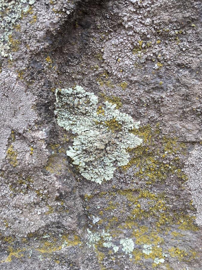 Gris, verde, negro, liquen en la roca, combinación simbiótica de un hongo con algas o bacteria, cierre para arriba, macro en caíd imagenes de archivo